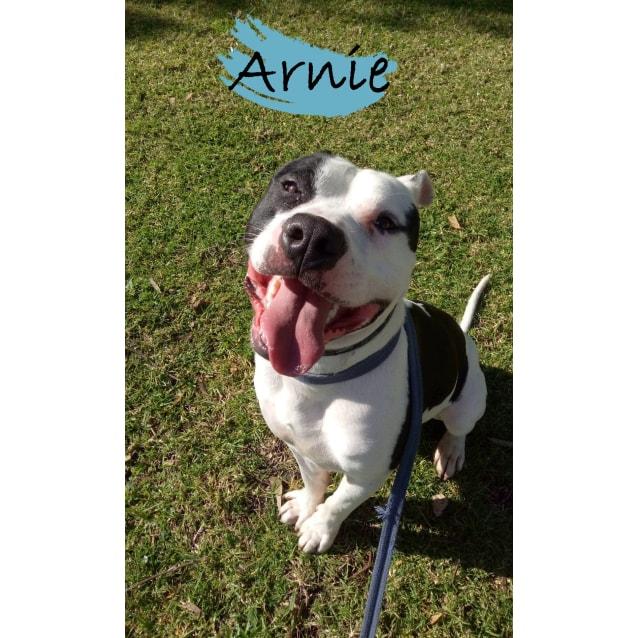 Photo of Arnie