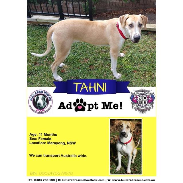 Photo of Tahni