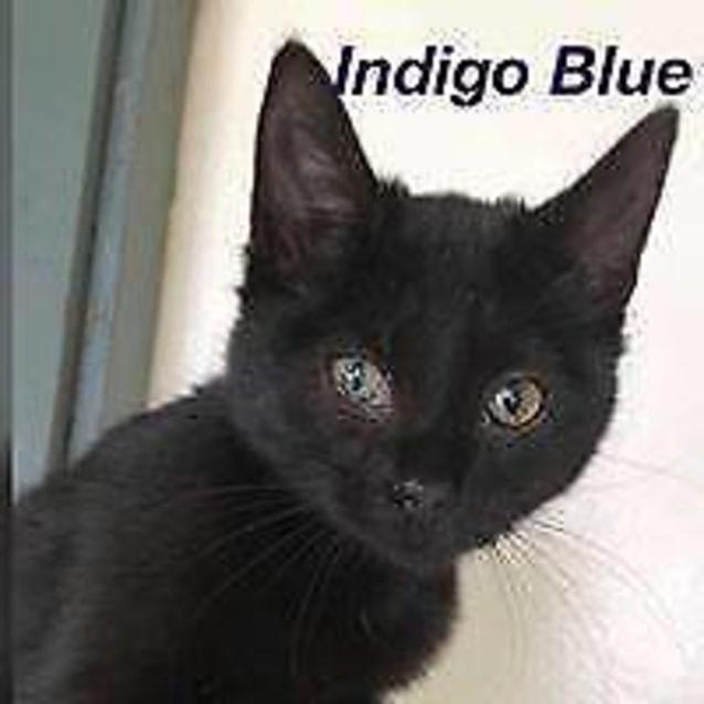 Photo of Indigo Blue