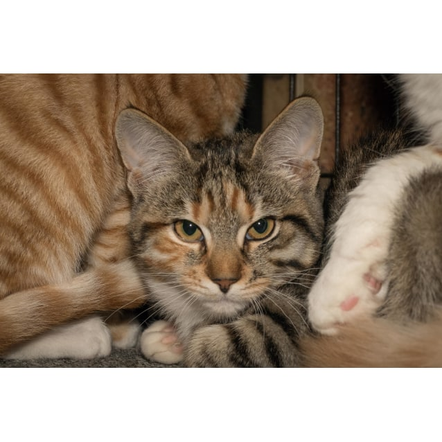 Photo of Mabel**On Trial With My New Family**