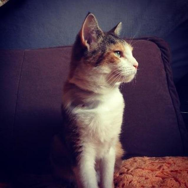 Photo of Chloe 880398