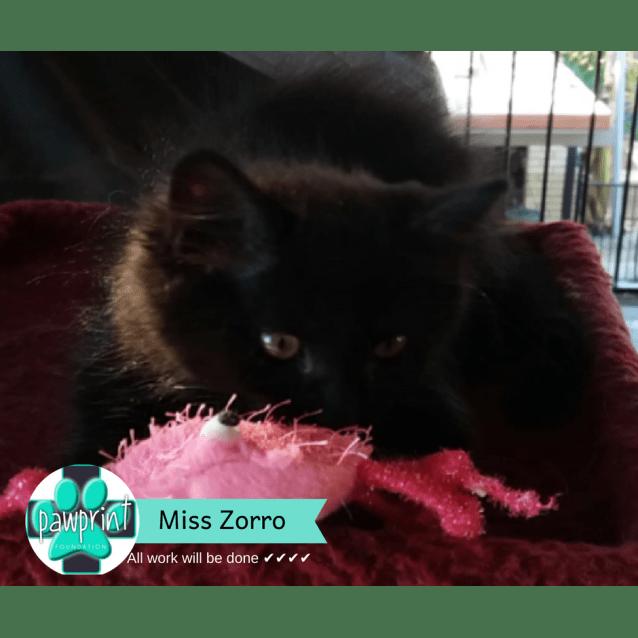 Photo of Miss Zorro