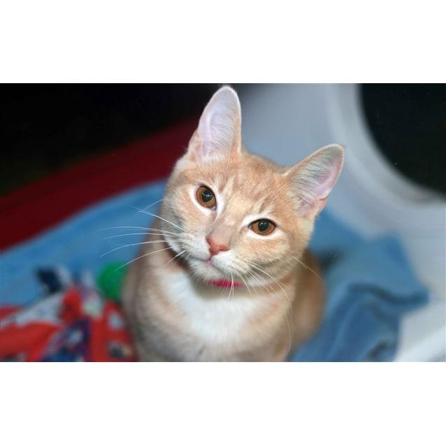 Photo of Shammy