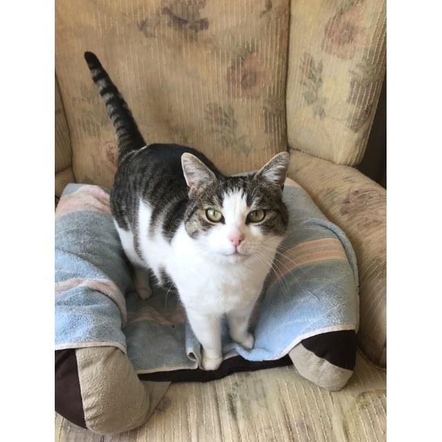 Photo of Pound Cats | Mackenzie The Talking Cat