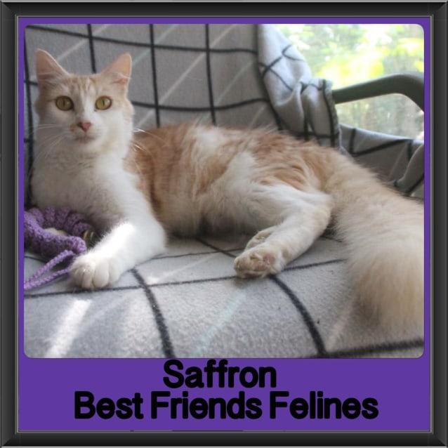 Photo of Saffron
