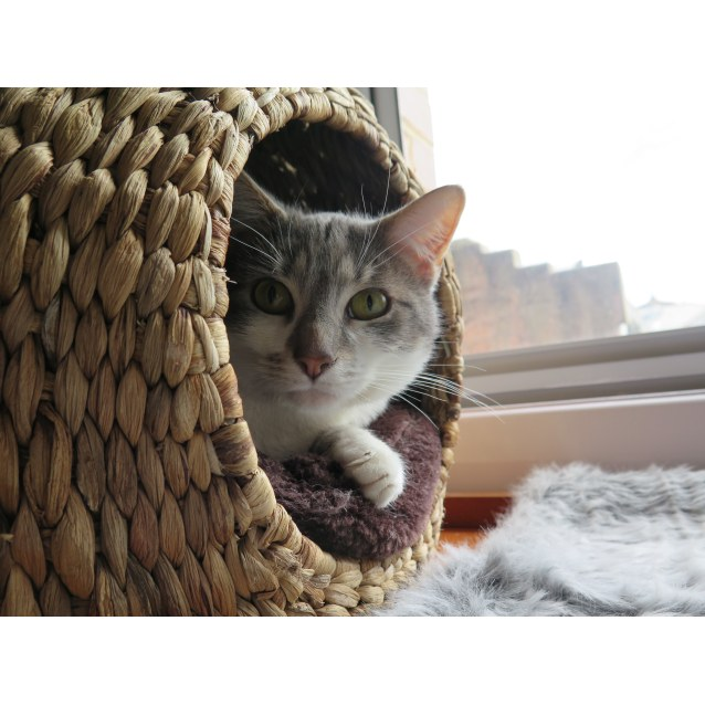Photo of Alistair   Located In Brunswick East