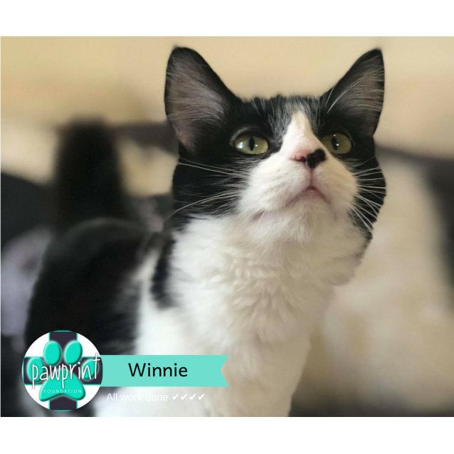 Photo of Winnie