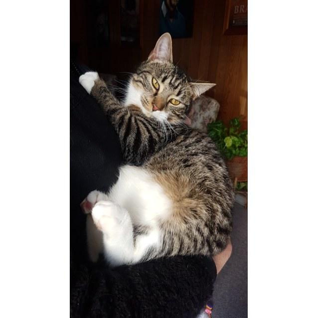 Photo of Cuddlepie