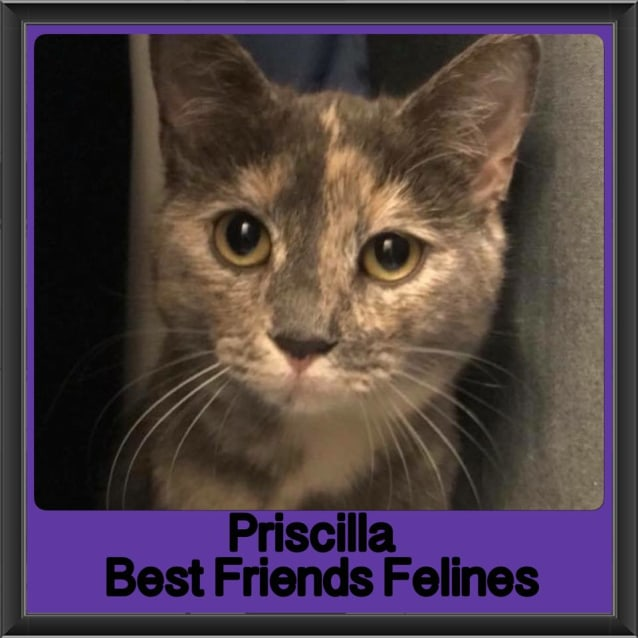 Photo of Priscilla