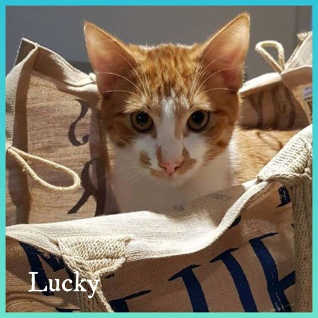 Photo of Lucky