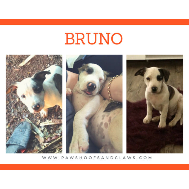 Photo of Bruno