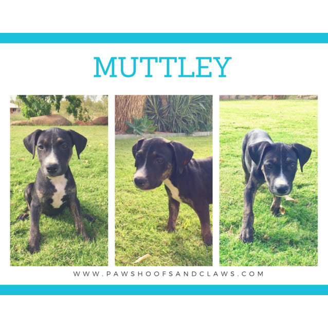 Photo of Muttley