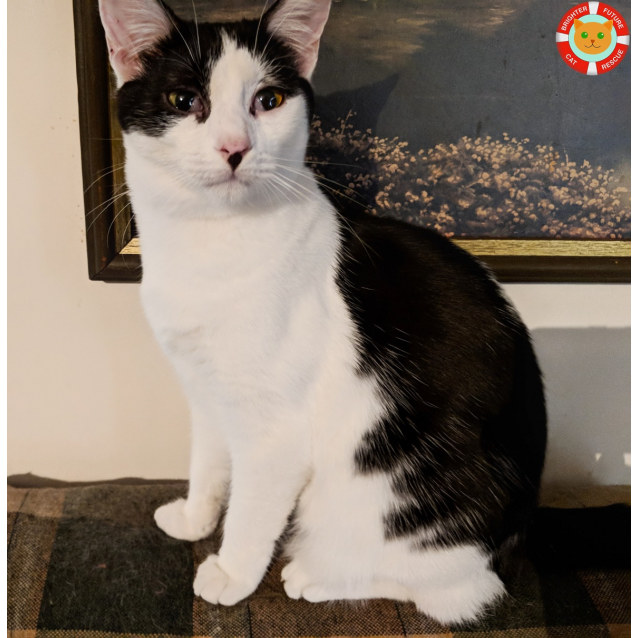 Photo of Meenie