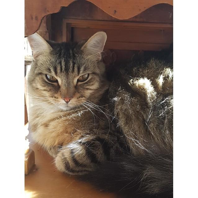 Photo of Zebby