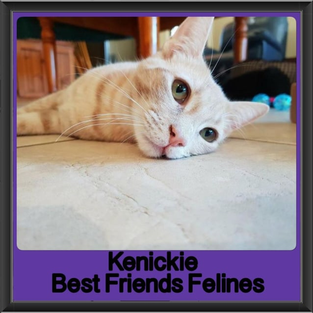 Photo of Kenickie