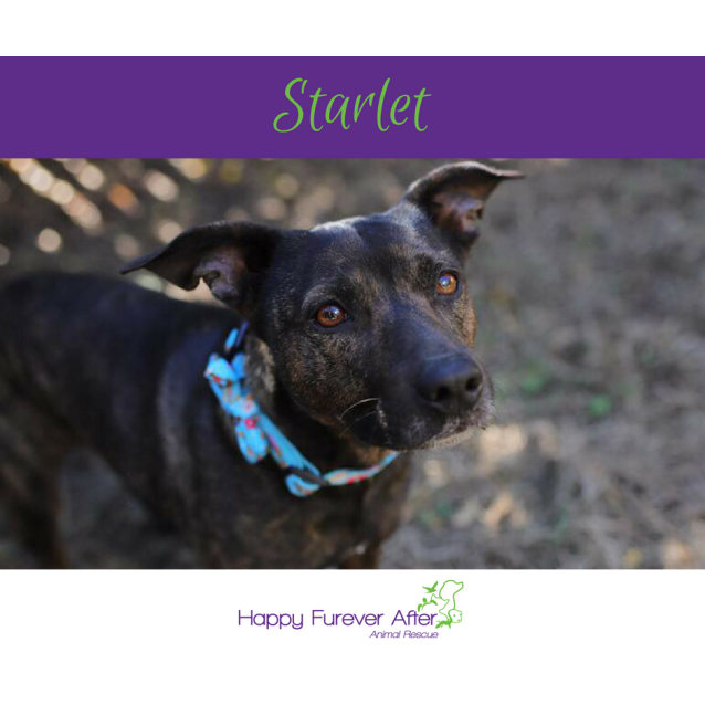 Photo of Starlet