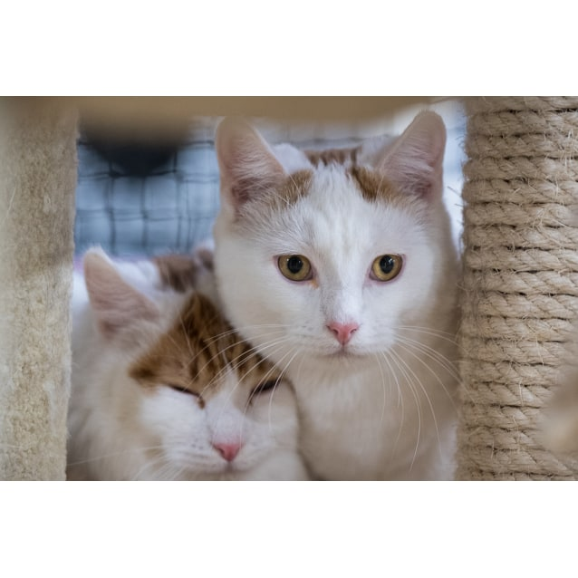 Photo of Perry And Pippin **On Trial With My New Family **