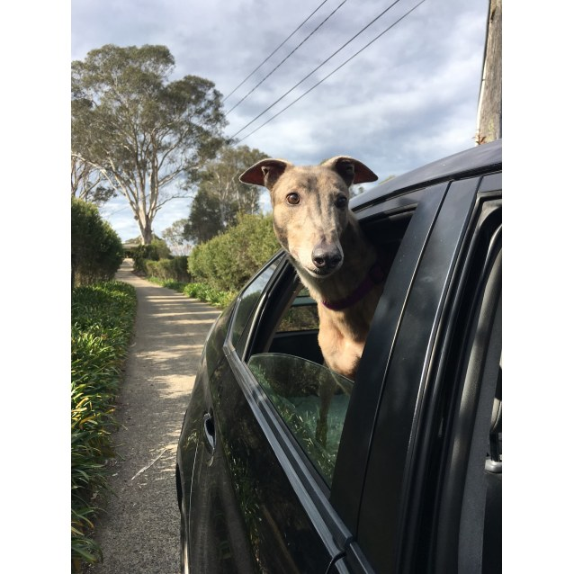 Photo of Jed (In Foster 5 Aug Canberra)