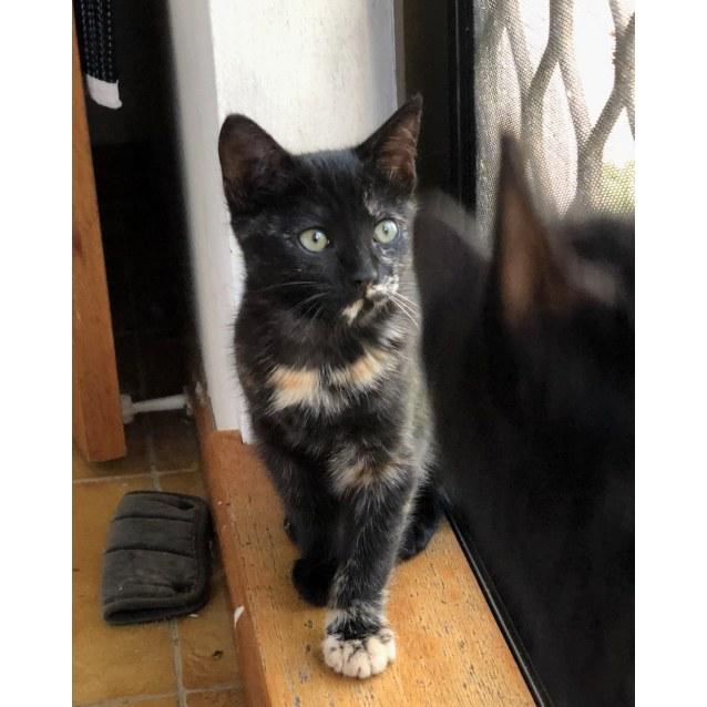 Photo of Velda