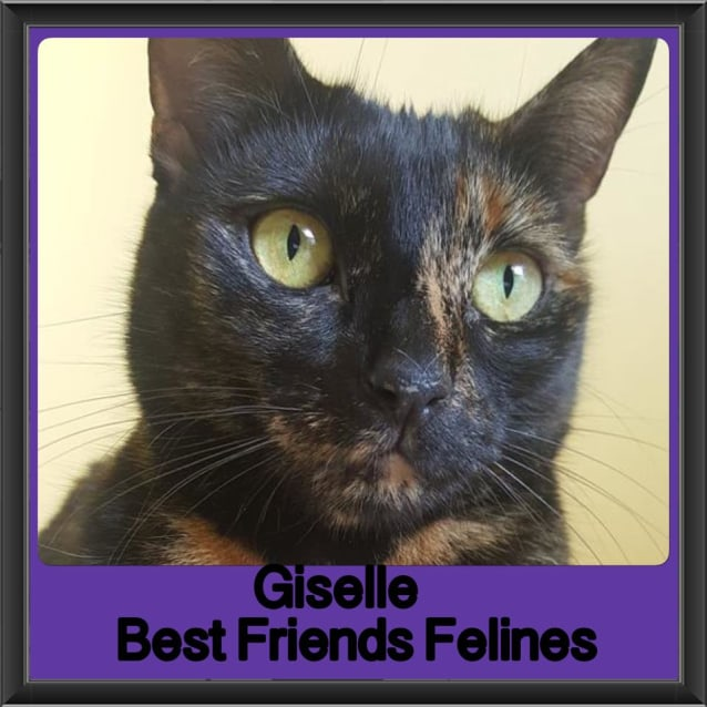 Photo of Giselle