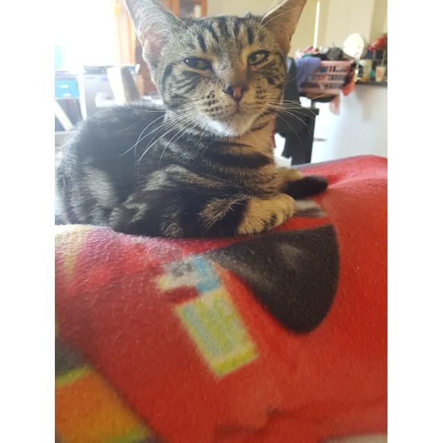 Photo of Stephan ~Rainbow Cat Rescue~