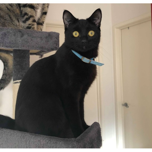 Photo of Pipsqueak (Located In Officer)