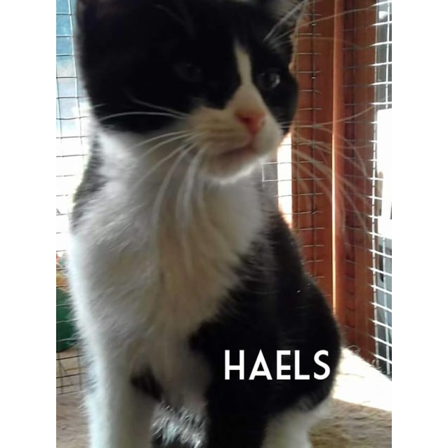 Photo of Haels