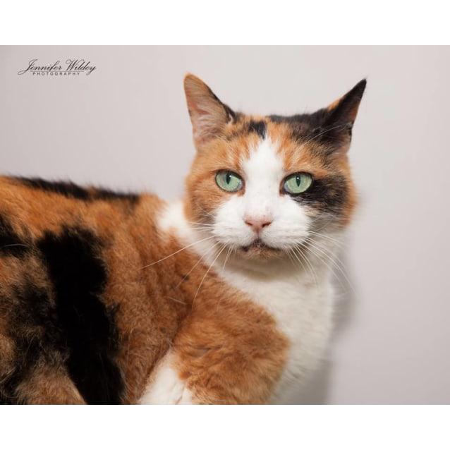 Photo of Ac0889   Lily (Nana)
