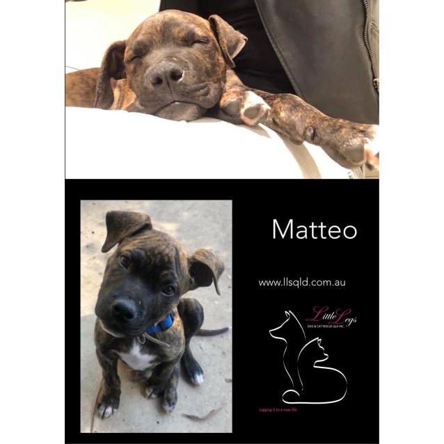 Photo of Matteo