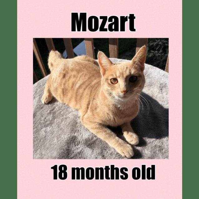 Photo of Mozart