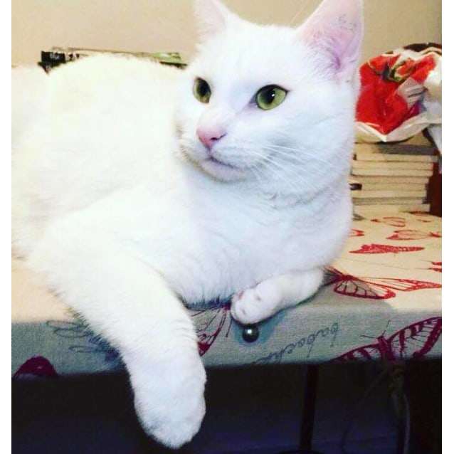 Photo of Sashy