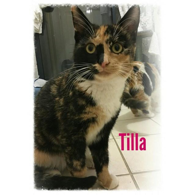 Photo of Tilla