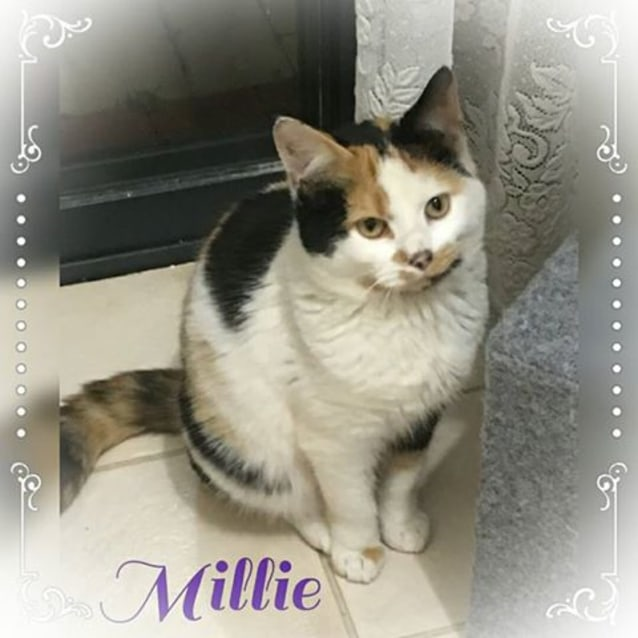 Photo of Millie