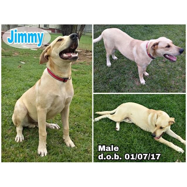 Photo of Jimmy