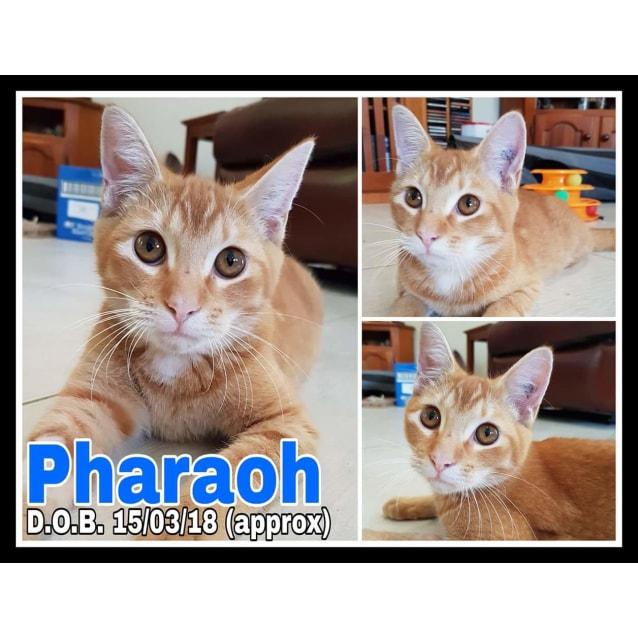 Photo of Pharaoh