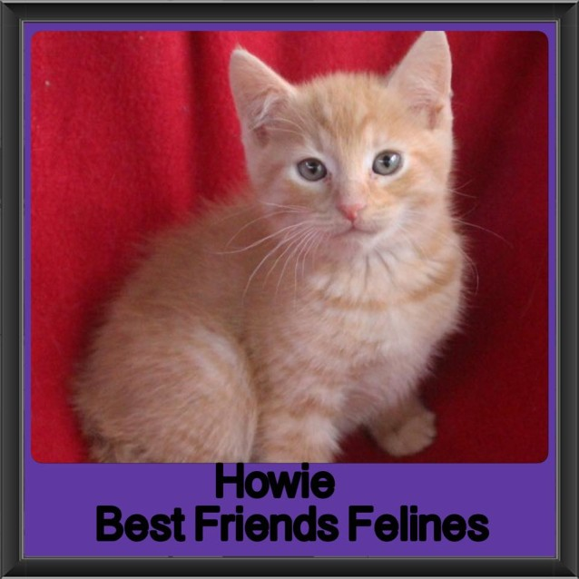 Photo of Howie