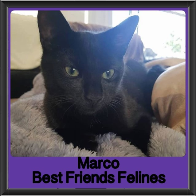 Photo of Marco
