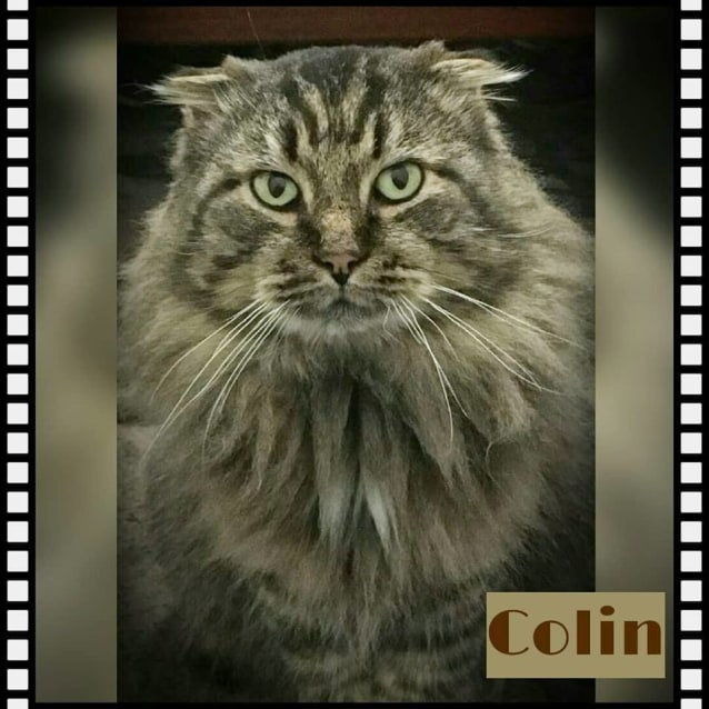 Photo of Colin