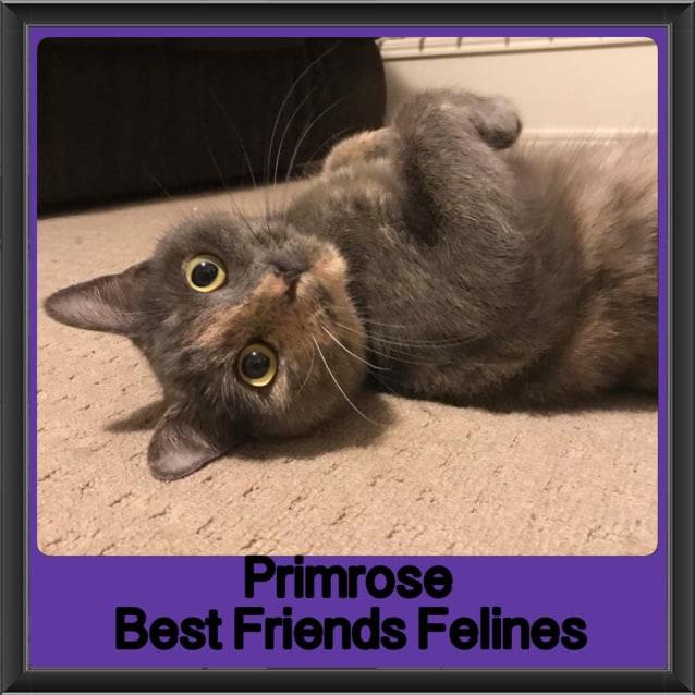 Photo of Primrose