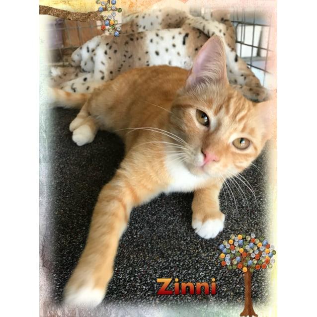 Photo of Zinni