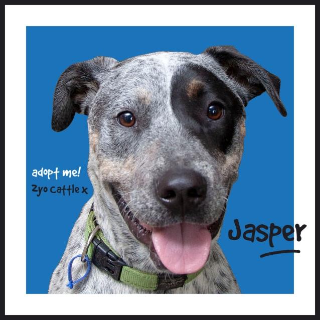 Photo of Jasper ~ 2yo Cattle X Boy