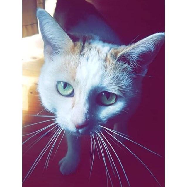 Photo of Shiny