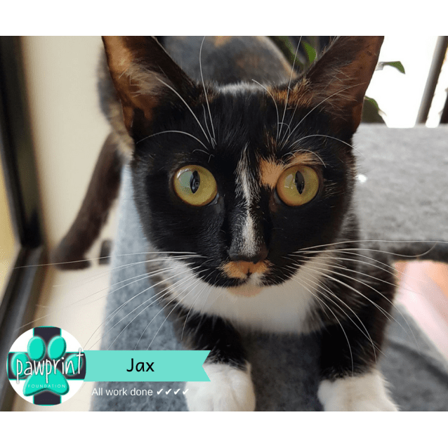 Photo of Jax