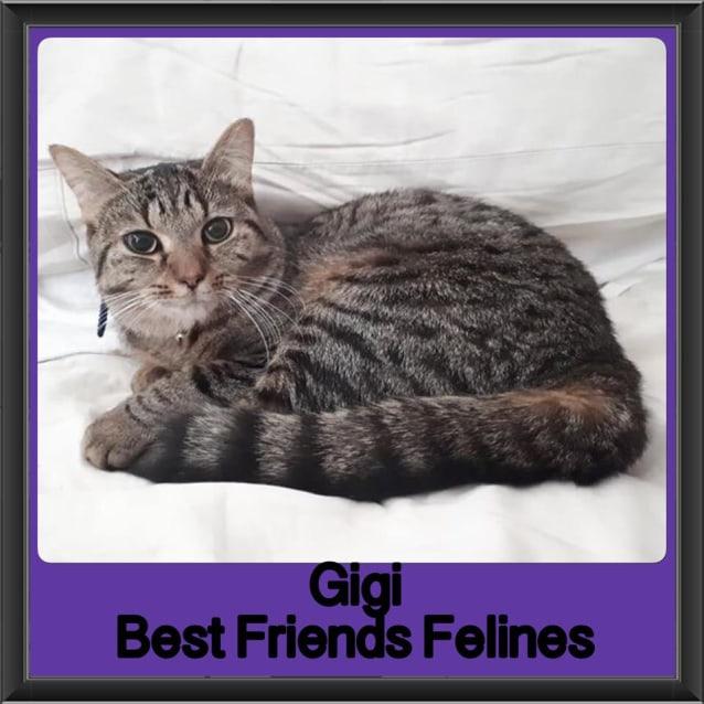 Photo of Gigi