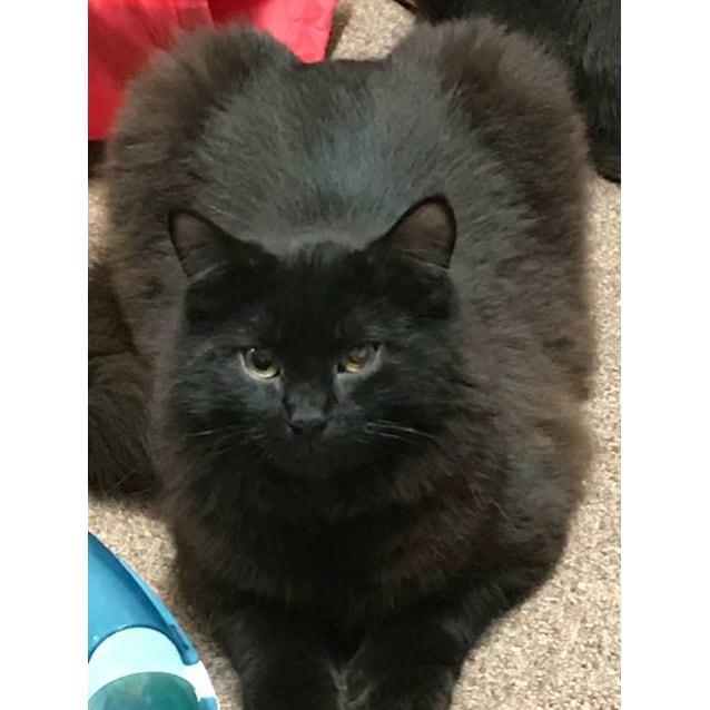 Photo of Bobo ~Rainbow Cat Rescue~