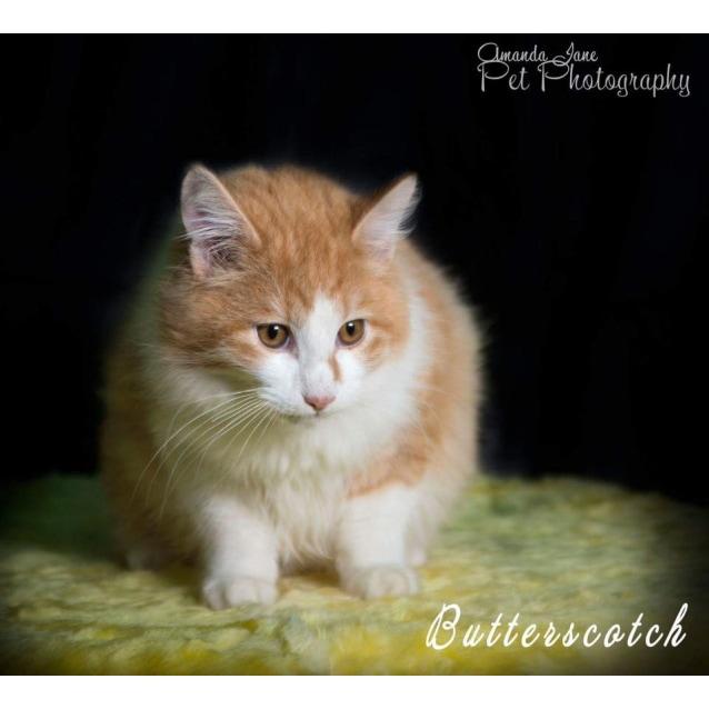 Photo of Butterscotch