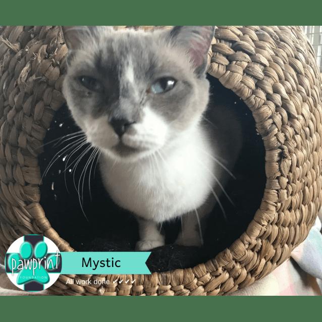Photo of Mystic