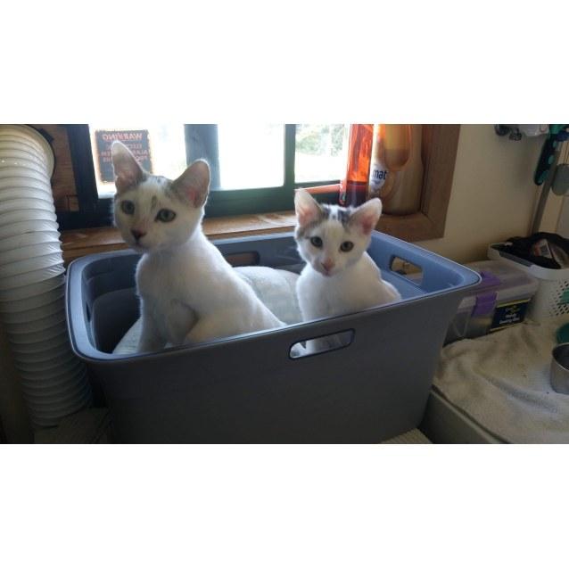 Photo of Kiwi & Lemon