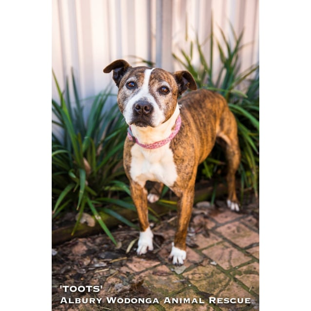 Photo of Toots
