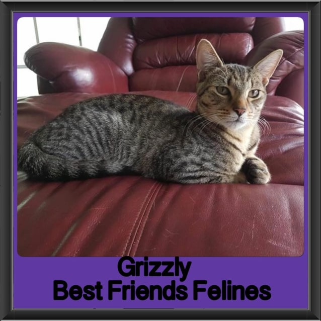 Photo of Grizzly